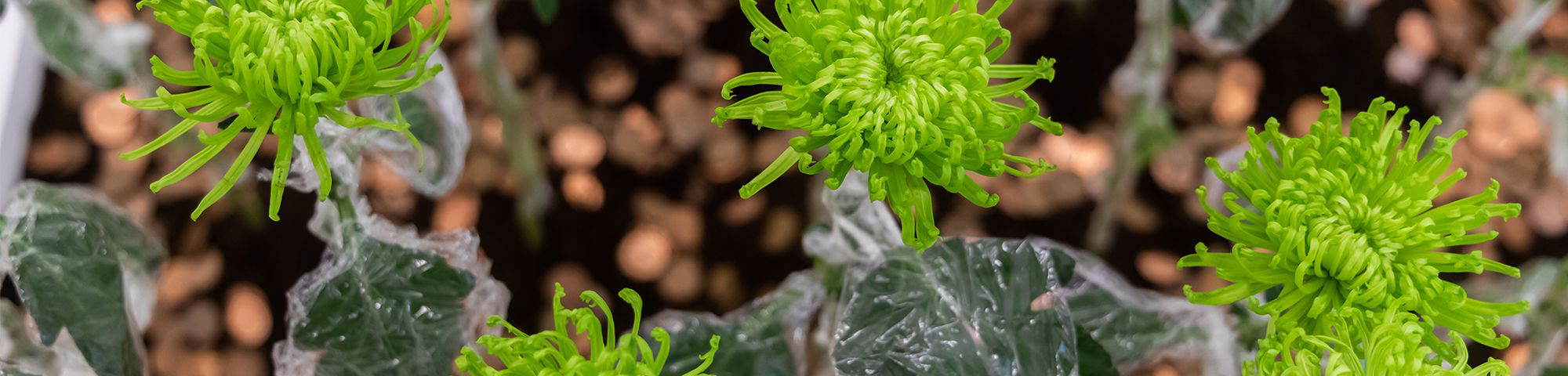 Close up shot of green plants